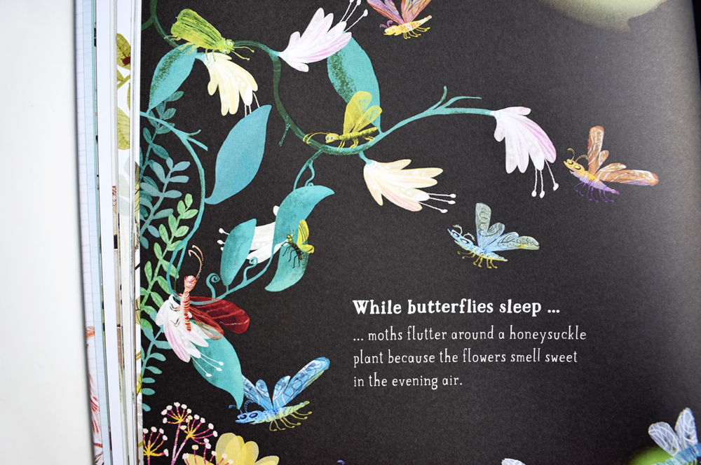 beautifully-illustrated-bookabout-bugs-emmajayne-designs