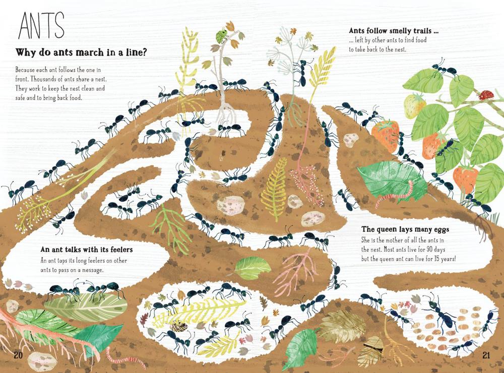 beautifully-illustrtaed-book-about-bugs-emmajayne-designs